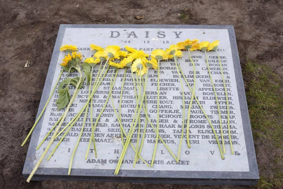 Pushing up Daisy: Whispers of New Life Mar 2015